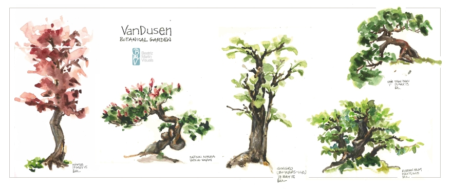 Bonsai exhibition at VanDusen Botanical Garden (Watercolor)