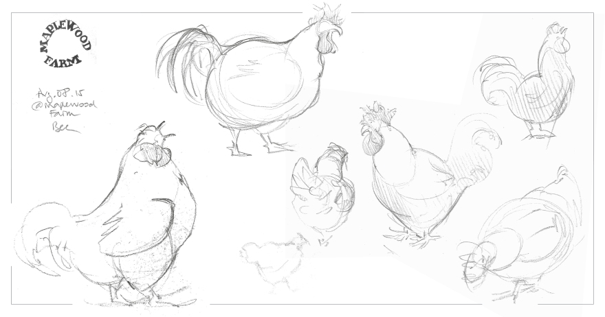 Life studies of chickens  and roosters at Maplewood Farm, Vancouver BC (Graphite)