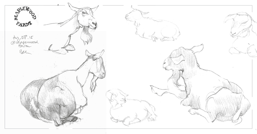 Life studies of goats at Maplewood Farm, Vancouver BC (Graphite)