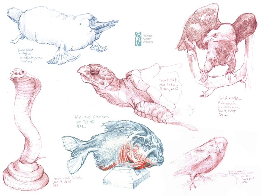 Sketches at Beaty Biodiversity Museum, Vancouver BC (Color pencil)