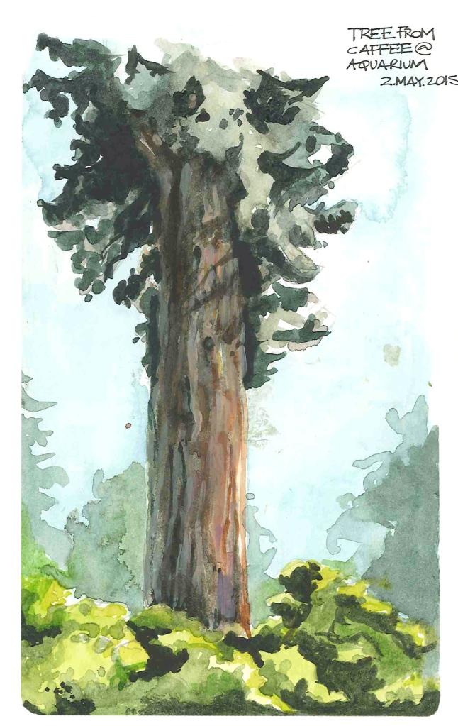Pine tree (Watercolor)