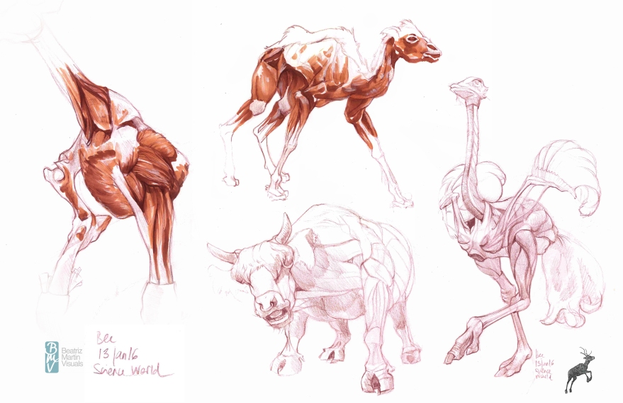 Sketching at the Animals inside out - the exhibition (Color pencil and copic ©  markers)