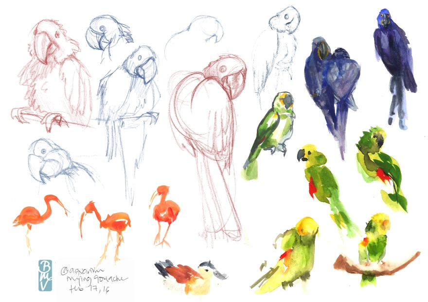 Sketching birds at the Vancouver aquarium (Color pencil and gouache)